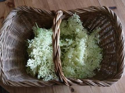 elderflower-in-basket_orig.jpg