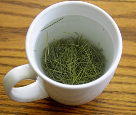 a-brewed-cup-of-pine-needle-tea.jpg