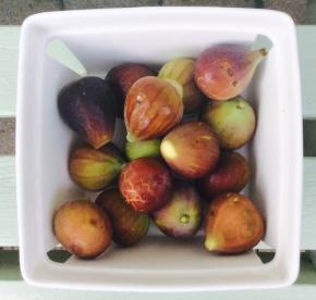 freshly-grown-figs.jpg