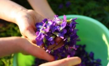 violets-600x399.jpg