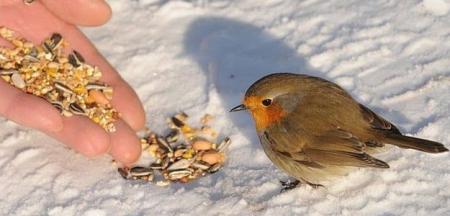 nature-en-hiver_14.jpg
