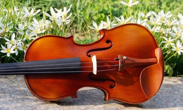 spruce-wood-jujube-wood-tailpiece-4-4-violin-send-violin-case-bows-maple-side-panel.jpg
