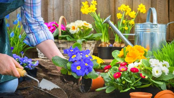 how-to-get-your-garden-ready-for-spring-136404654713303901-160318102134.jpg