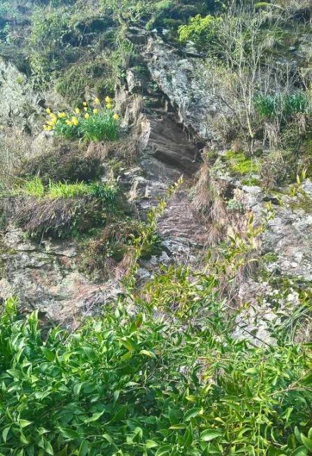 rocher fleuri.jpg