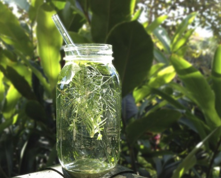 mixed-herb-infused-water.jpg
