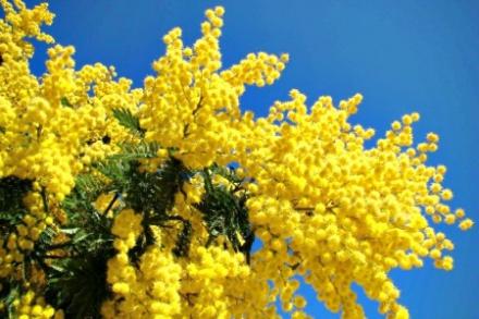 la-mimosa-18.jpg