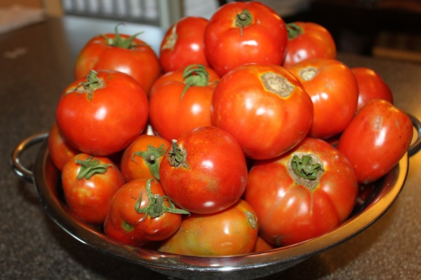 fresh-picked-tomatoes.jpg