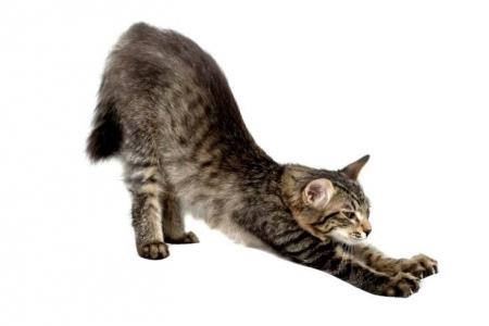 stretch-cat.jpg